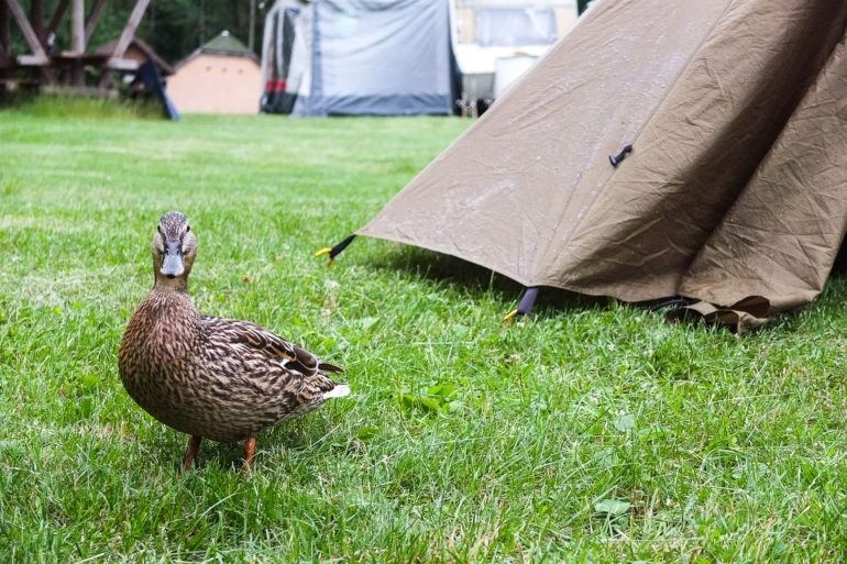 Bliskie spotkania z naturą na campingu w Wigierskim Parku Narodowym