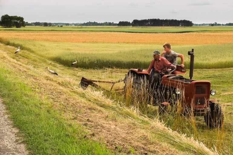 Bociany uwielbiają szukać pożywienia na skoszonym polu. Tutaj widać jak kroczą zaraz za traktorem