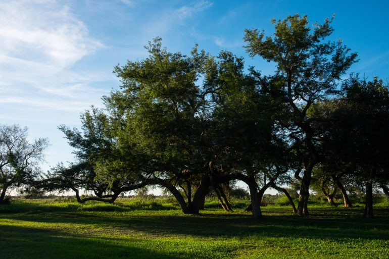 Soczysta zieleń na terenie jednej z estanci
