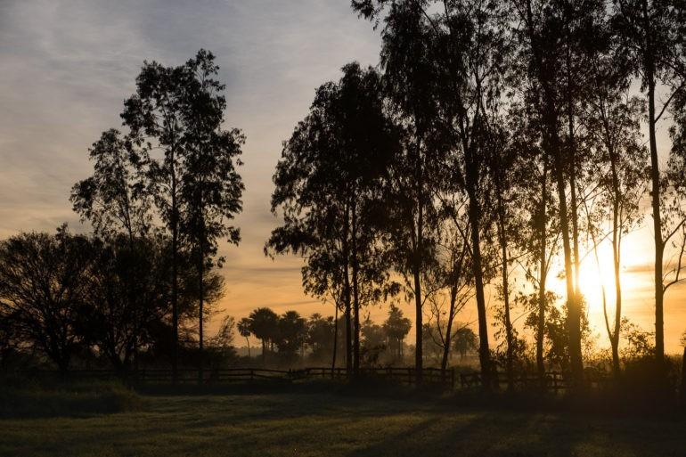Wschód słońca w zielonym Chaco