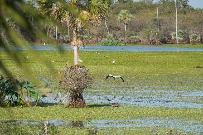 Wbrew pozorom w regionie można spotkać bardzo dużo wodnego ptactwa