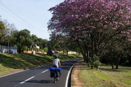 Boczna droga w Ciudad del Este. Ukwiecone drzewa lapacho