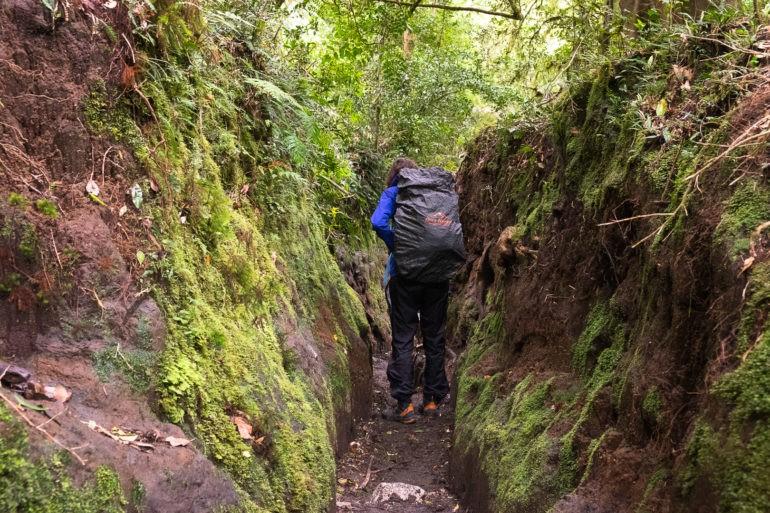 Spacer w zielonym tunelu