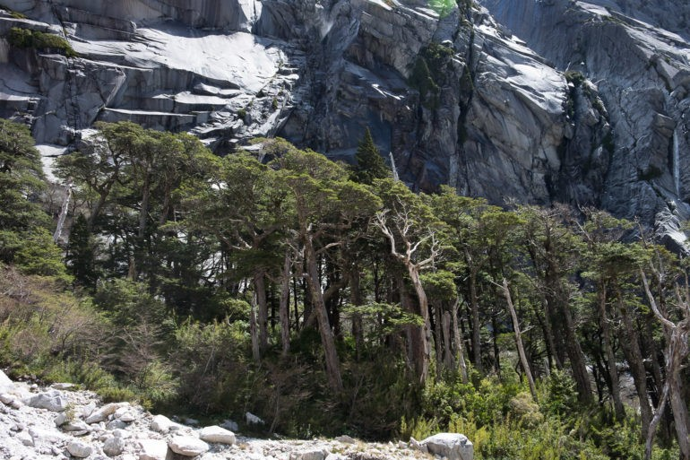 Ściana Cerro Amfiteatro i las