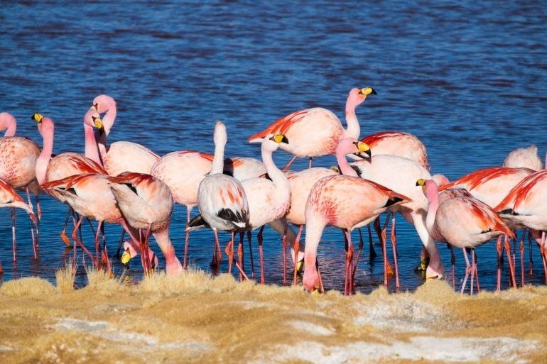 To są właśnie flamingi ;)