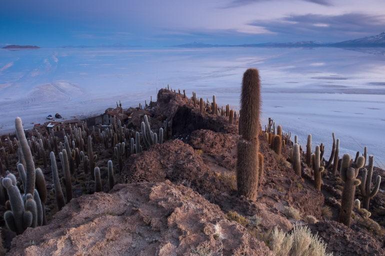 Przed brzaskiem na Wyspie Kaktusów pośrodku Salaru