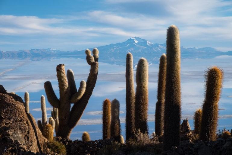 Jak sugeruje nazwa na wyspie jest sporo kaktusów