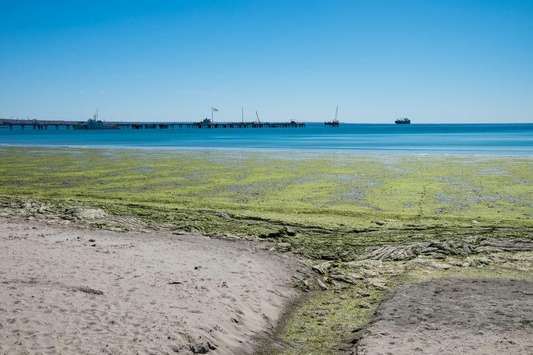 Odpływy i przypływy mają wpływ na to jakiego zwierza można wypatrywać z brzegu