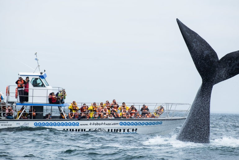 Wieloryb prezentuje swoją potężną sylwetkę