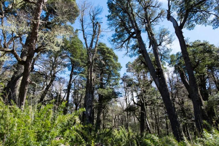 Po stronie Chile zaskoczyły nas gęste zielone lasy