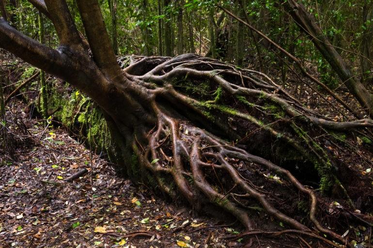 """Las żyje jakby tu nikt jeszcze nie """"posprzątał"""""""