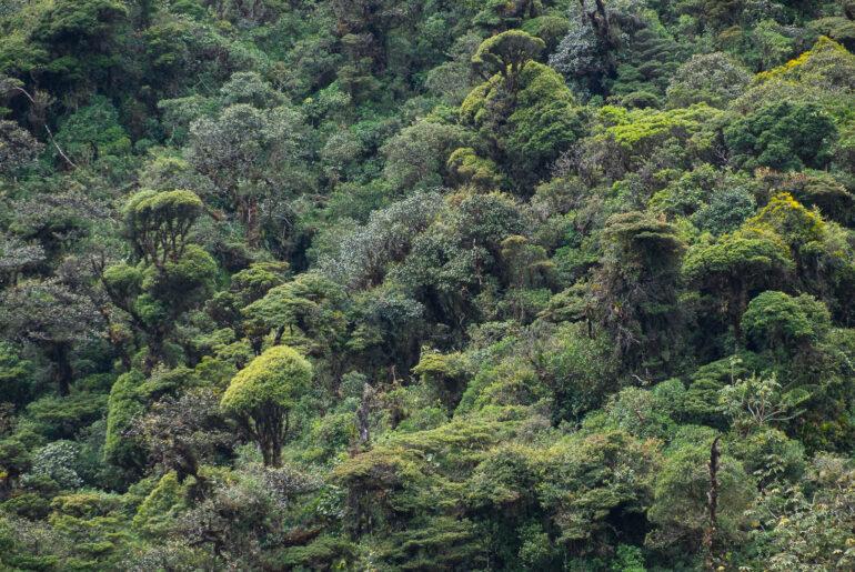 Deszczowy kolumbijski las