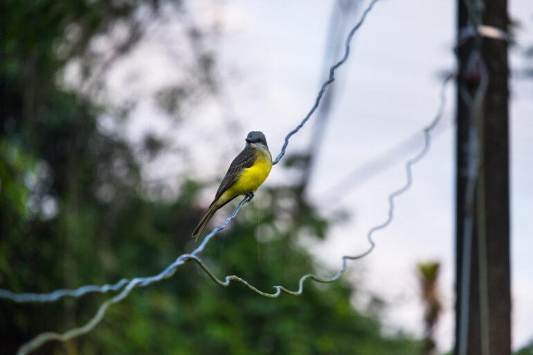 Ptasiek z Kolumbii