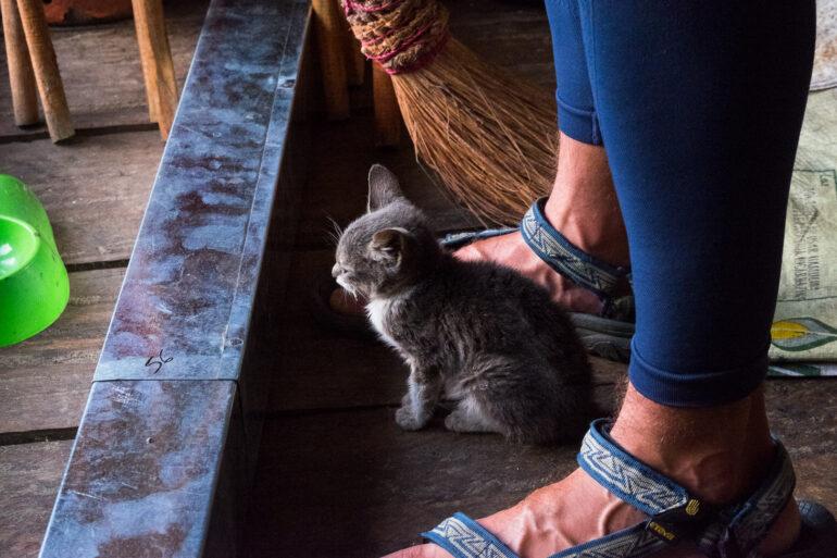Dlaczego, mimo że nie lubię kotów one do mnie przyłażą?